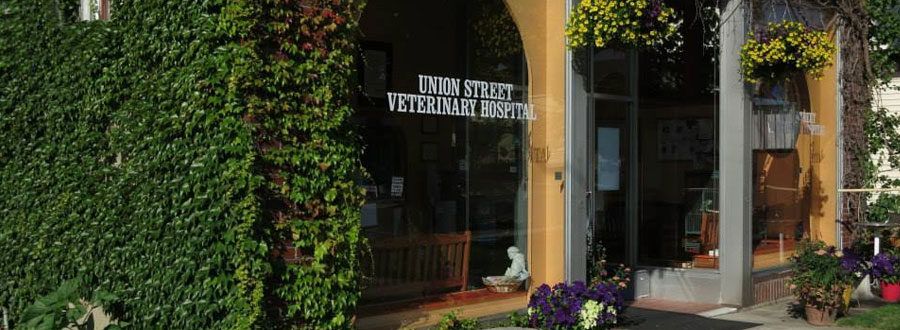 Union Street Veterinary Hospital